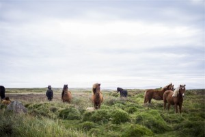 public-domain-caballo-banco de imagenes
